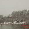 # 12 - Snow falling at Evergreen Lake Hudson Illinois