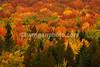 Fall colors at Lake Umbagog - September 2010