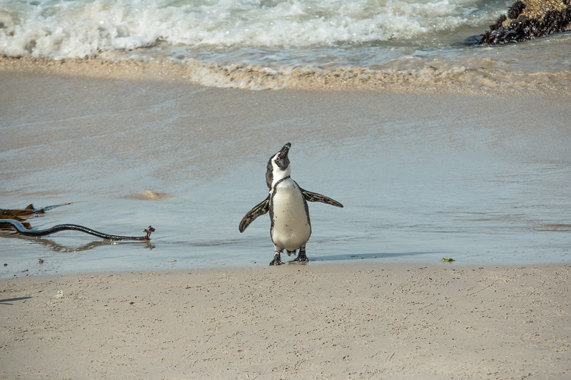 Playful Penguin