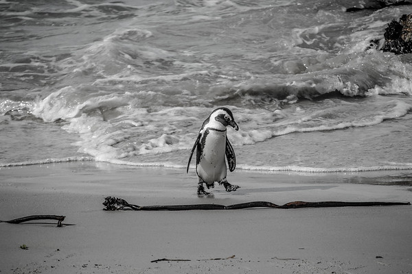 The Pensive Penguin