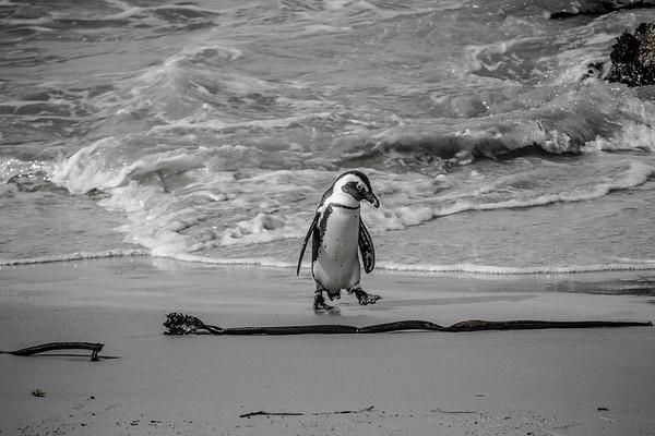 The Pensive Penguin