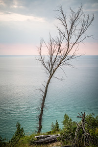 Lone Tree on Lake Michigan