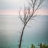 Lone Tree on Lake Michigan