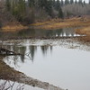 Beaver (dam)