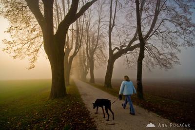 Groblje in fog - Nov 16, 2008