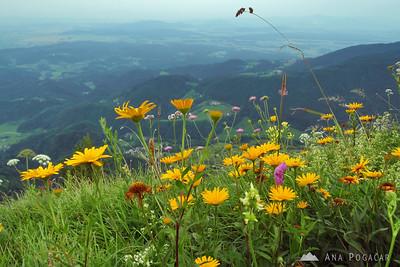 Kamniški vrh - Jul 1, 2009