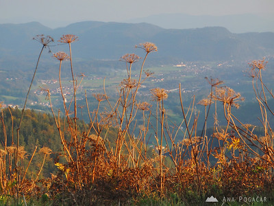 Hike to Kamniški vrh hill in late afternoon