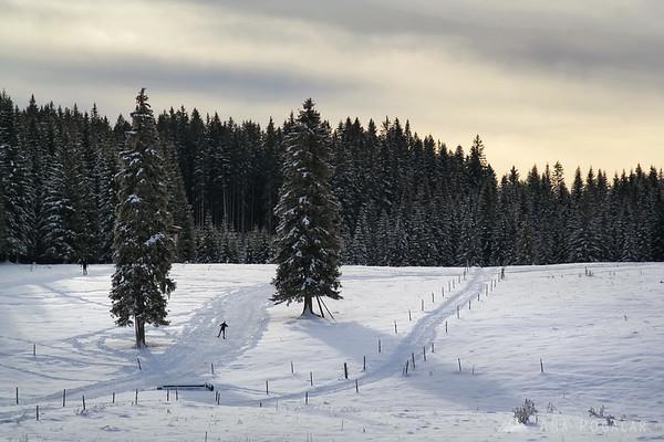 Pokljuka in snow