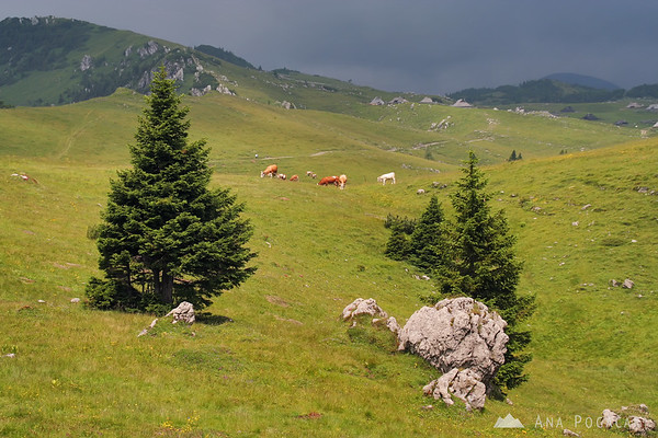 Velika planina in stormy weather