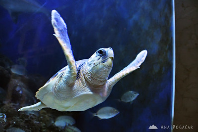 Piran Aquarium - Apr 11, 2010