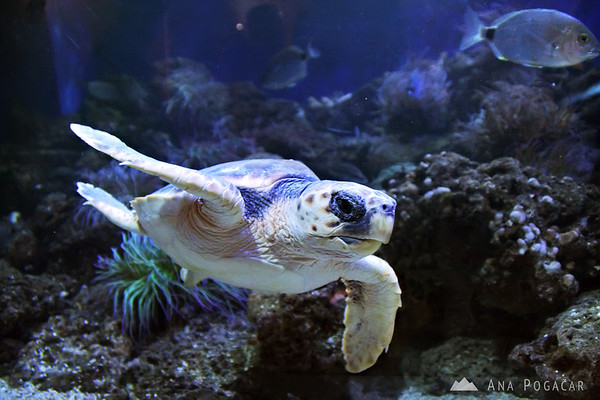 Piran Aquarium - turtle