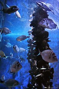 Piran Aquarium