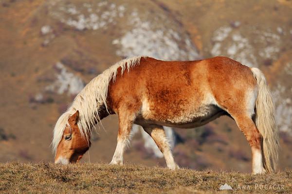 A horse below Kamniški vrh hill