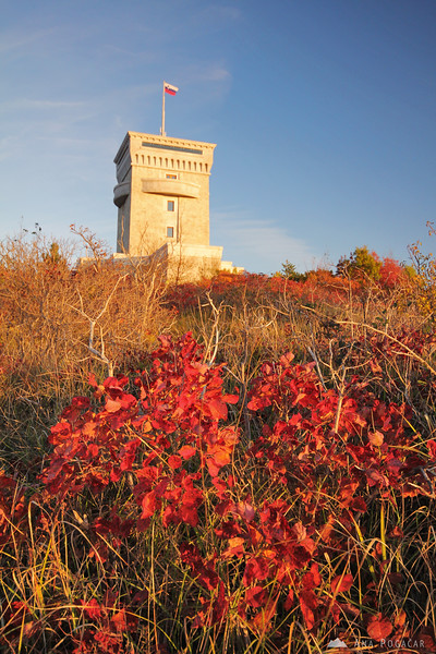 Cerje tower and smoke tree in the Karst region