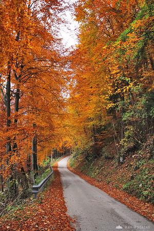 Fall colors on Stari grad hill