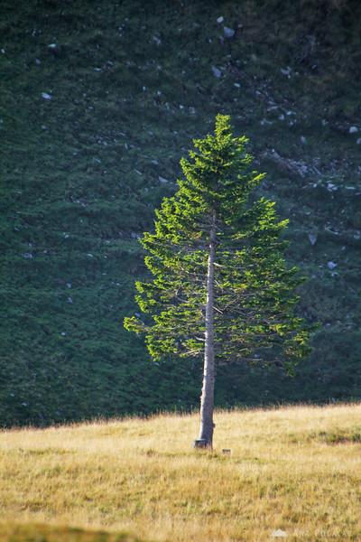 A side-lit tree