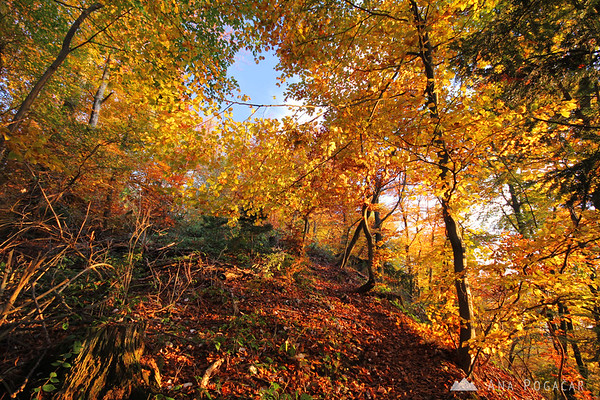 Fall foliage in the way to the top of Špica hill