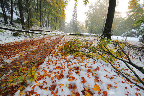 There was a lot of leaves and even broken branches on the road to Stari grad hill.