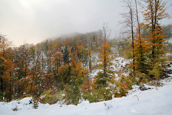 A hint of fall colors mixed with snow and fog
