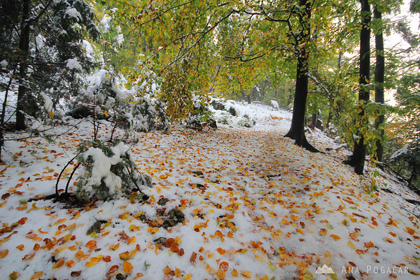 Hiking on extremely heavy wet snow covered in falled leaves