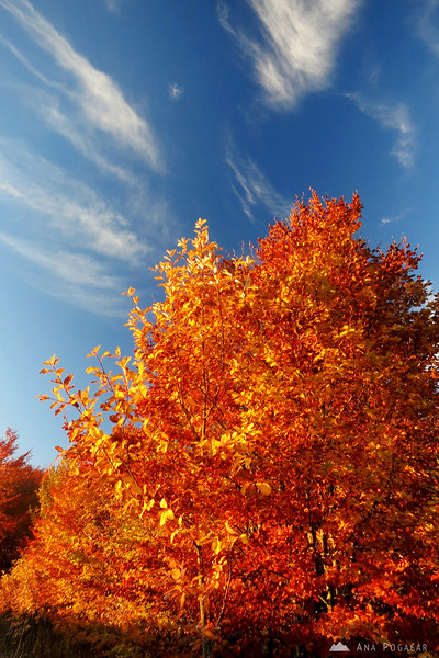 A fiery tree at the top.