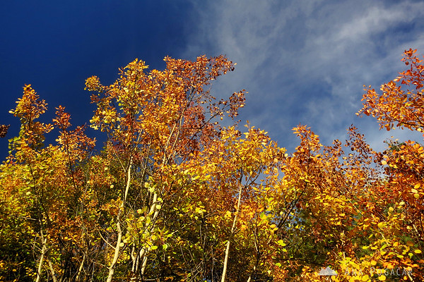 Fall foliage on the climb to Kamniški vrh.