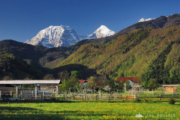 Mt. Kočna and Grintovec are still snow-capped while the valley is already green and in bloom.