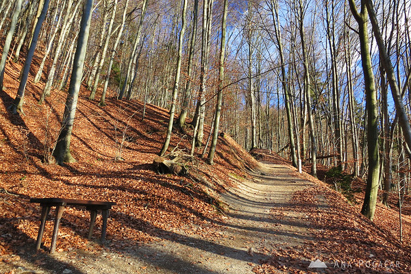 Path through the woods to the top of Stari grad