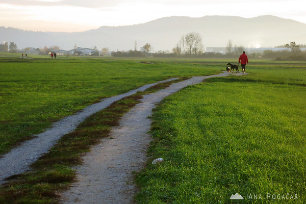 This path is popular for dog-walking.