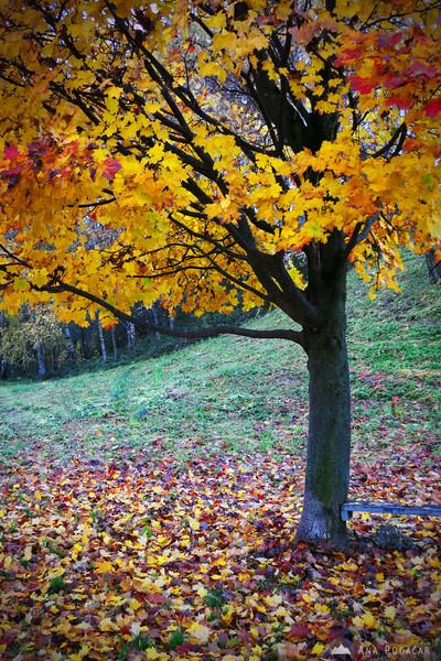 Yellow tree.