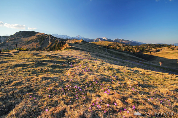 Late afternoon on Velika planina