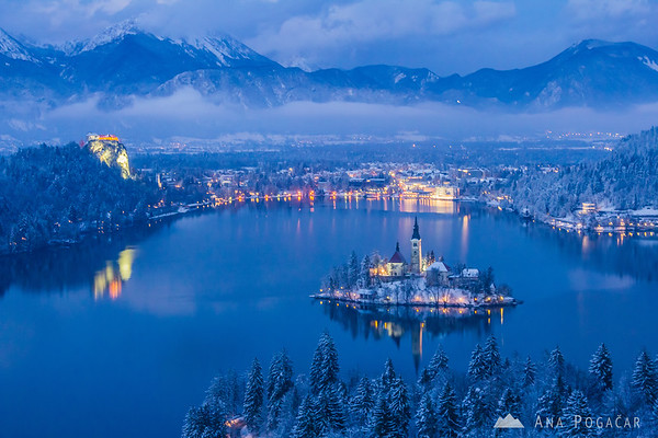 Lake Bled from Ojstrica hill during blue hour
