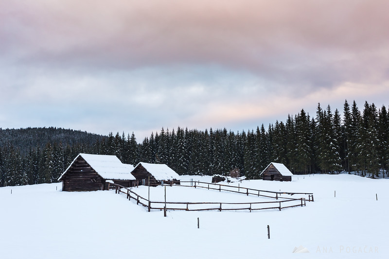 Cloudy winter day at Planina Zajavornik on the Pokljuka plateau