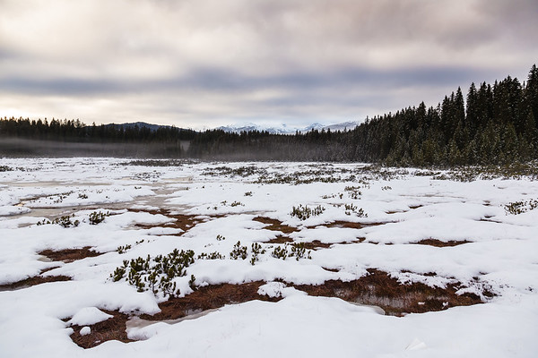 Cloudy winter day at the Šijec marshes on the Pokljuka plateau