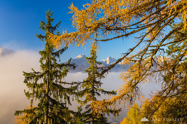 Morning mists from the hills above Kranjska Gora; Mt. Mojstrovka and Mt. Jalovec through the golden larches.
