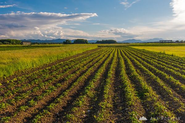 Fields around Zalog