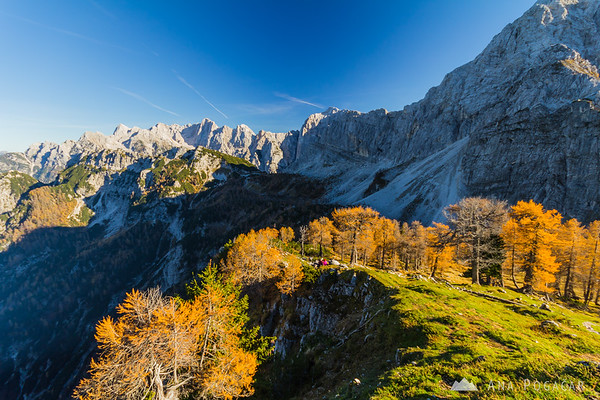 Golden larches on Mt. Slemenova špica