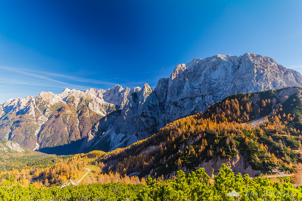 Golden larches at Vršič pass