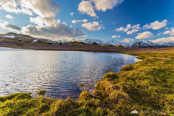 Crocuses on Velika planina