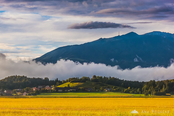 Golden fields between kamnik and Menges, Krvavec in the background