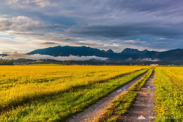 Golden fields between kamnik and Menges