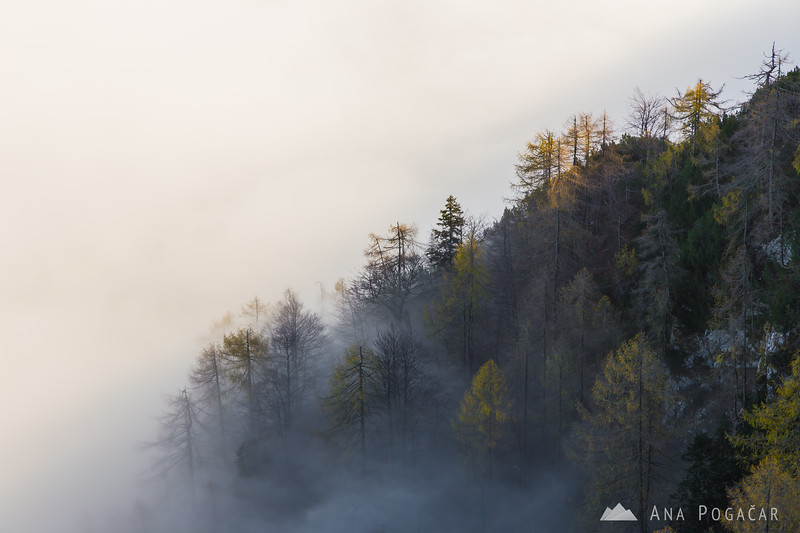 Views of the sea of fog from Vogel mountain above Lake Bohinj