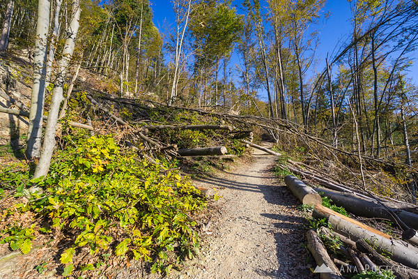 Many fallen trees are still lying across the trail - the result of the horrible ice storm in February.