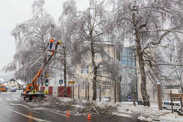 Removing dangerous tree branches in Kamnik