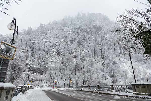 After the ice and snow storm in Kamnik: fallen trees on the slopes of Stari grad