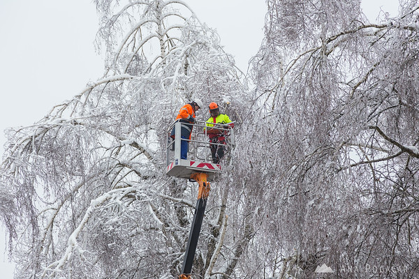 Removing dangerous tree branches in Kamnik