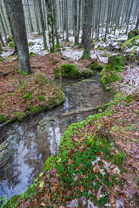 Streams in the woods on the way to the Upper Martuljek waterfall