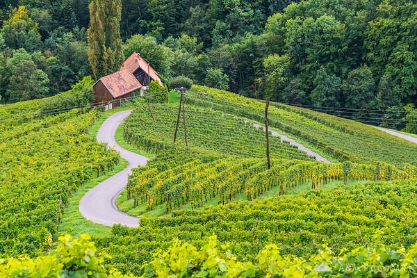 """The famous """"Heart in the vineyard"""" in Špičnik"""