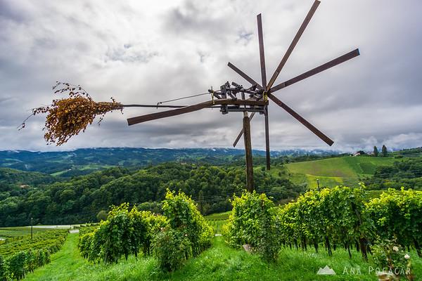 Vineyard in Špičnik