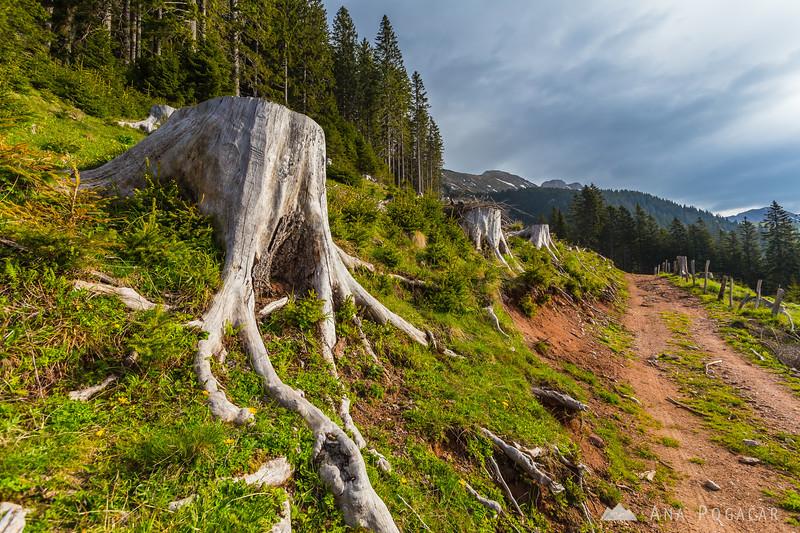 The trail from Kofce to Šija planina in the Karavanke mountains